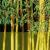 http://adressedesite.free.fr/jardin/img/bambouseraie50.png